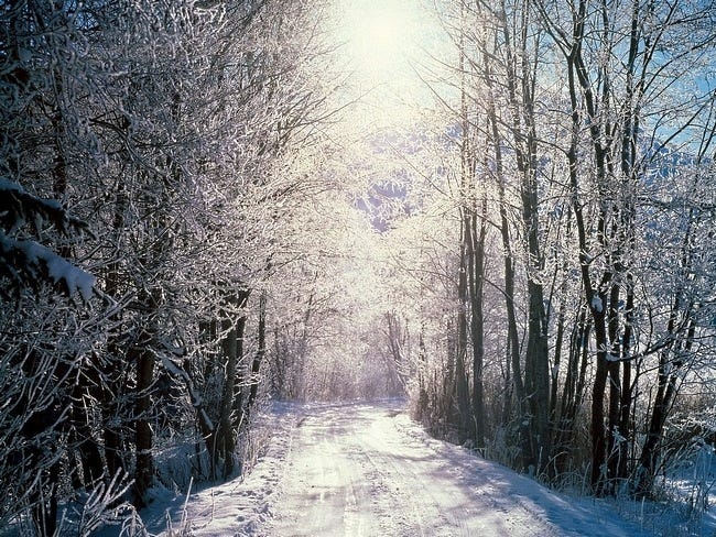 snow-covered-trees-05