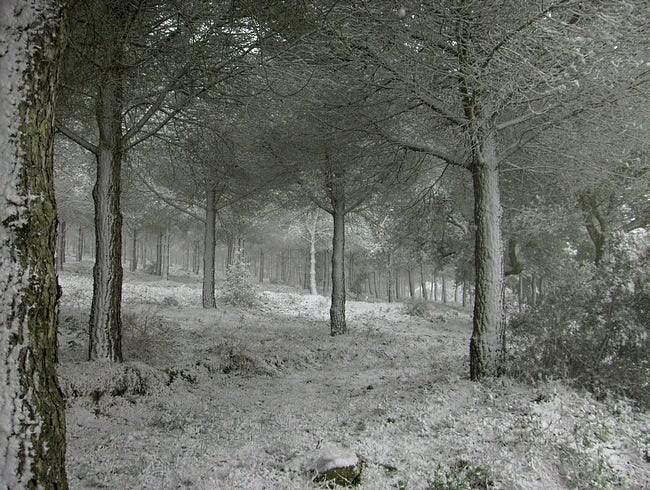 snow-covered-trees-09