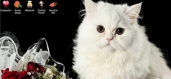valentine-kitty-cat-theme-00-(650-300)
