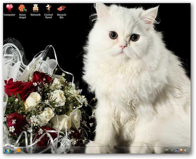 valentine-kitty-cat-theme-01