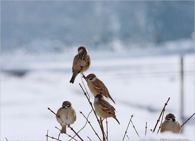 feathered-friends-04
