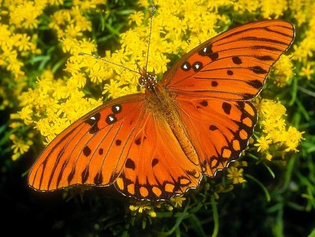 colourful-butterflies-01