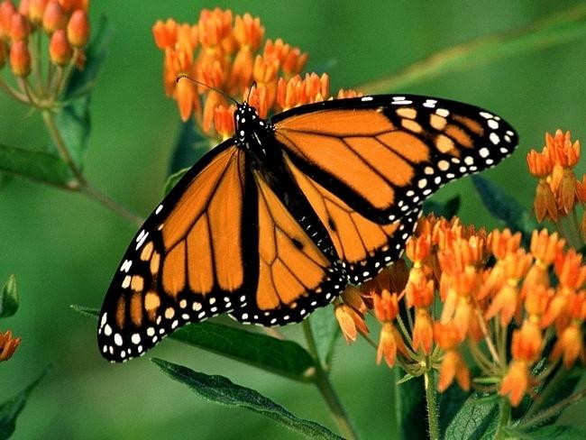 colourful-butterflies-02