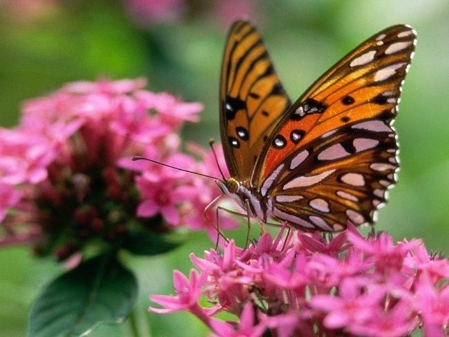 colourful-butterflies-03