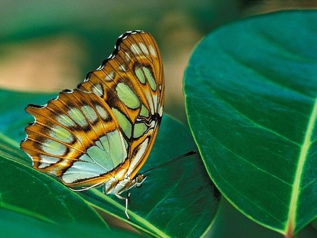 colourful-butterflies-04