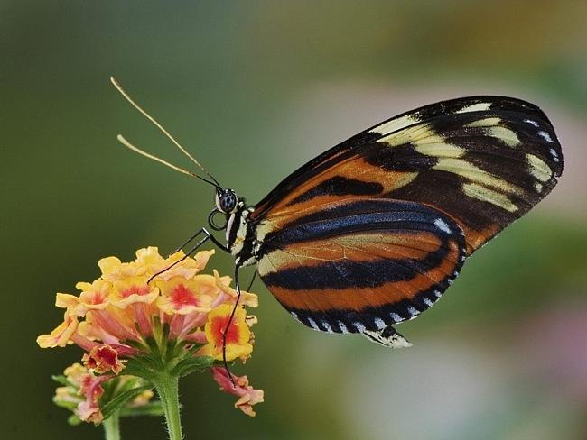 colourful-butterflies-05