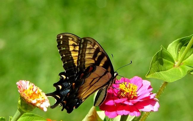 colourful-butterflies-06