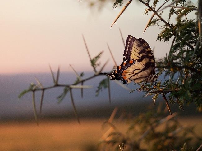colourful-butterflies-07