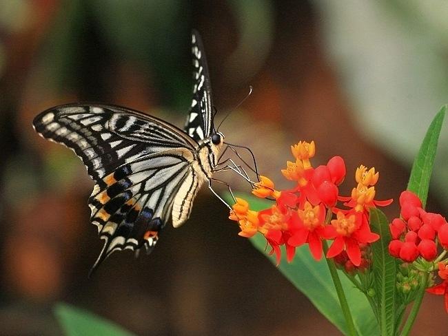 colourful-butterflies-08