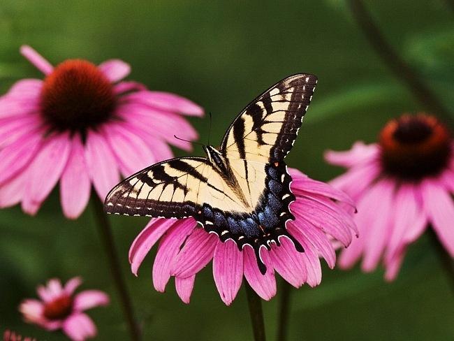 colourful-butterflies-09