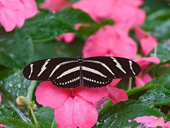 colourful-butterflies-10