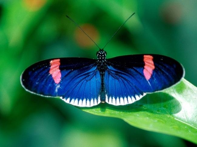 colourful-butterflies-11