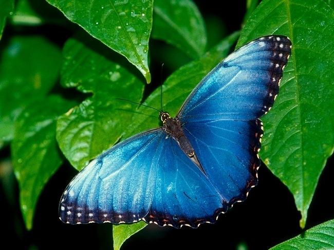 colourful-butterflies-12
