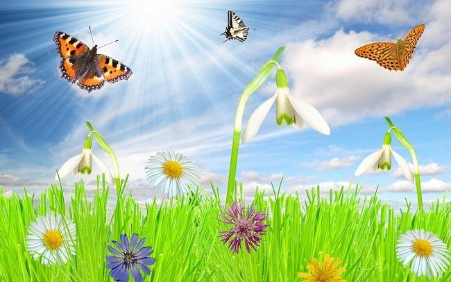 colourful-butterflies-13