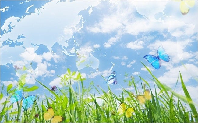 colourful-butterflies-15