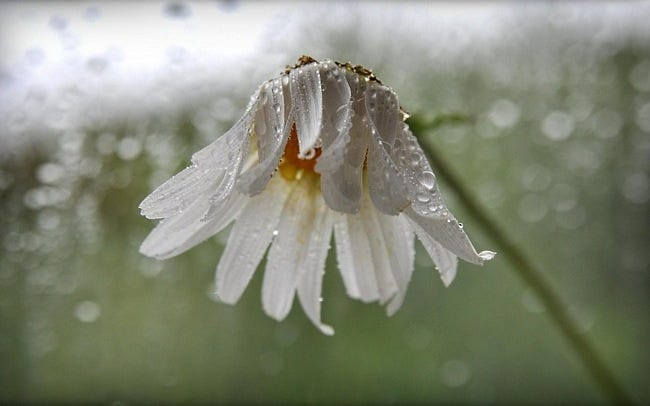 rainy-days-wallpaper-collection-series-one-03