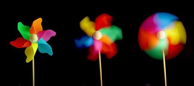 800px-Windflower-05237-nevit