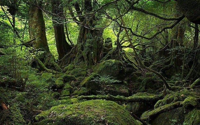 rainforests-wallpaper-collection-03