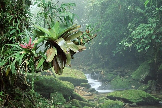 rainforests-wallpaper-collection-06