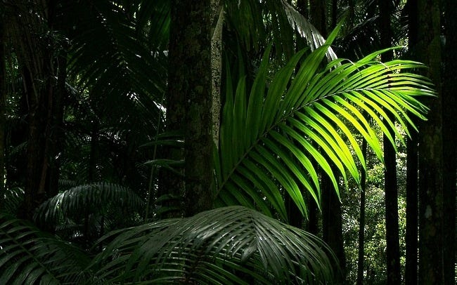rainforests-wallpaper-collection-08