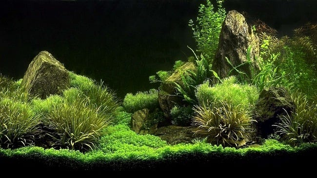 aquarium-customisation-set-01