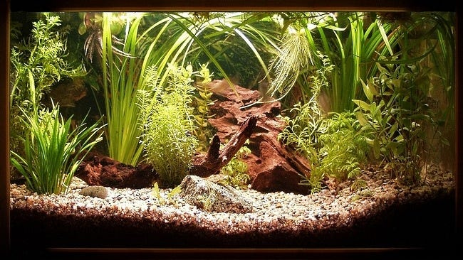 aquarium-customisation-set-02
