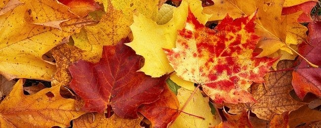 autumn-leaves-wallpaper-collection-00