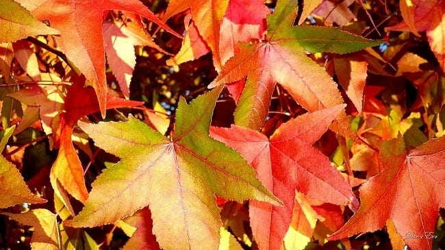 autumn-leaves-wallpaper-collection-08