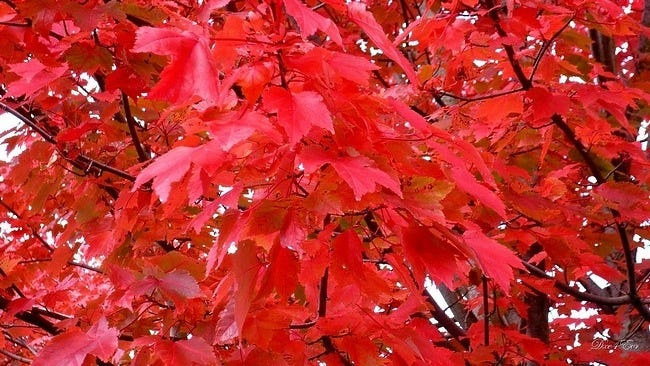autumn-leaves-wallpaper-collection-11