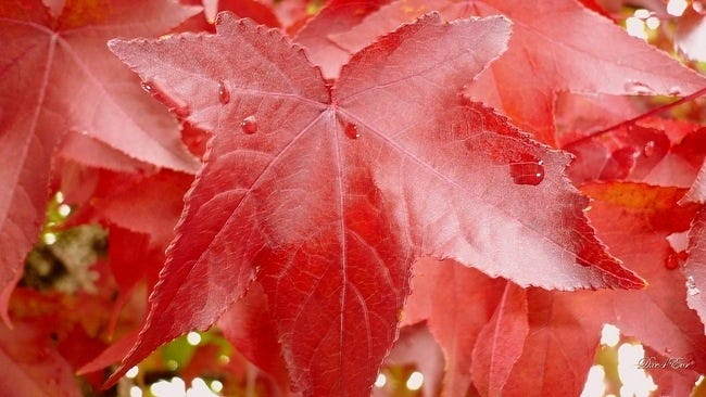 autumn-leaves-wallpaper-collection-13