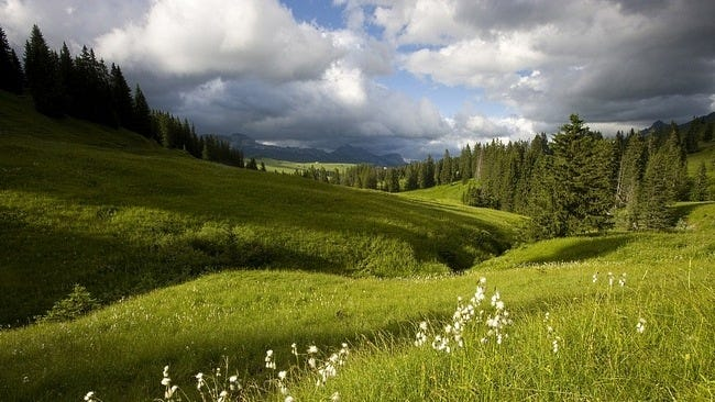 grasslands-wallpaper-collection-09