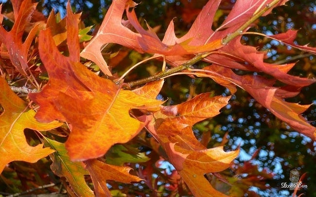 autumn-leaves-wallpaper-collection-09