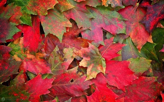 autumn-leaves-wallpaper-collection-14