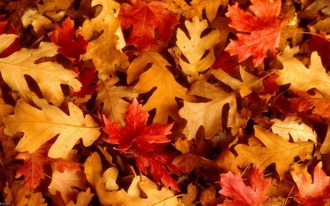autumn-leaves-wallpaper-collection-15