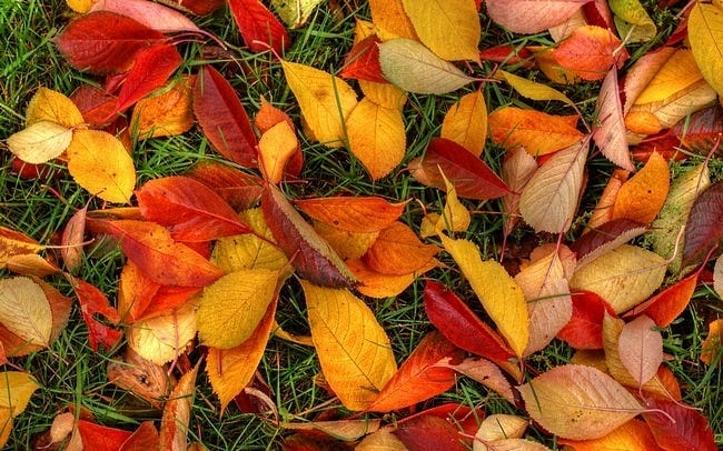 autumn-leaves-wallpaper-collection-19