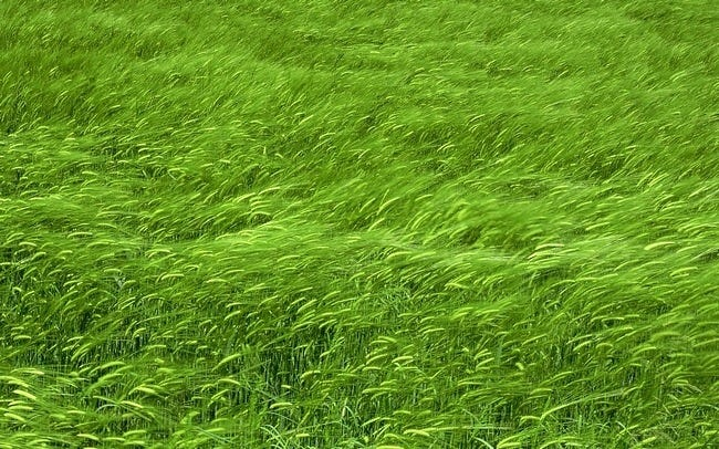 grasslands-wallpaper-collection-03