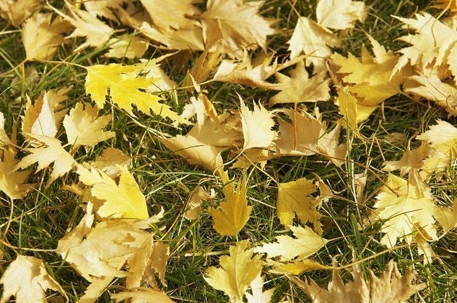 autumn-leaves-wallpaper-collection-18