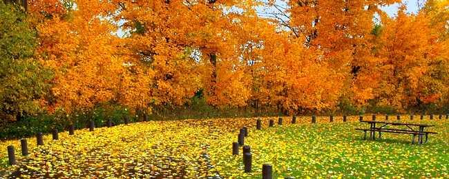 autumndesktopcustomisationset00.png
