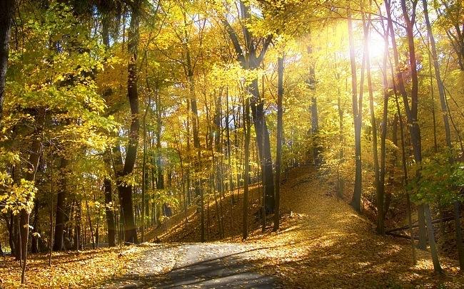 autumndesktopcustomisationset01.jpg