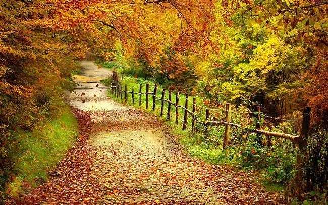 autumndesktopcustomisationset02.jpg