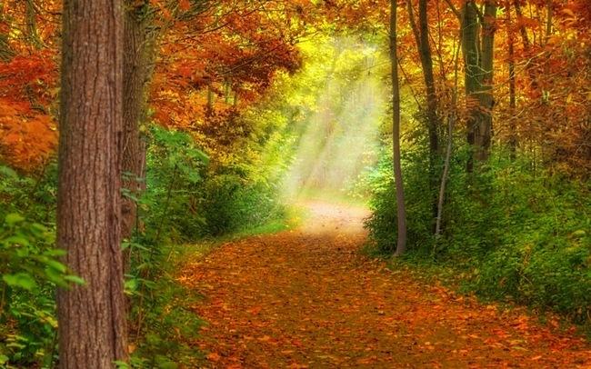 autumndesktopcustomisationset03.jpg