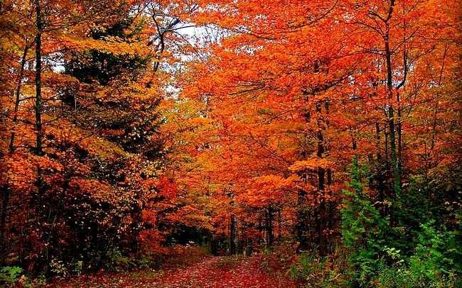 autumndesktopcustomisationset04.jpg