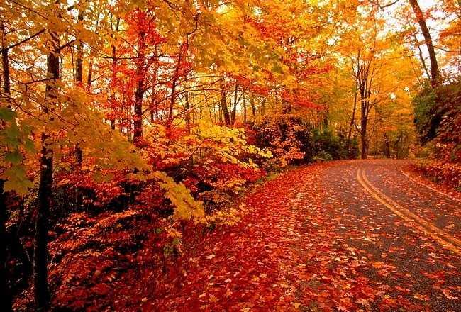 autumndesktopcustomisationset05.jpg