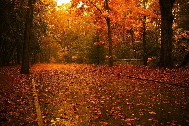 autumndesktopcustomisationset06.jpg