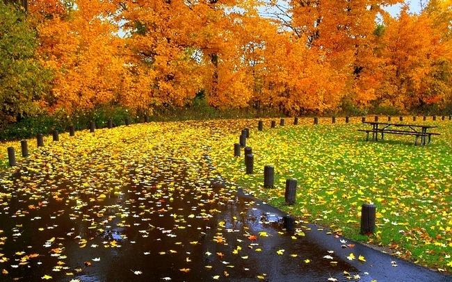 autumndesktopcustomisationset07.jpg