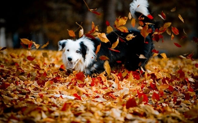 autumn-leaves-wallpaper-collection-02