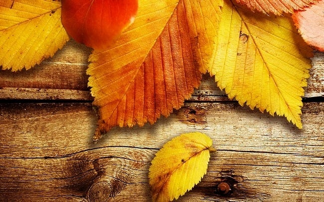 autumn-leaves-wallpaper-collection-04