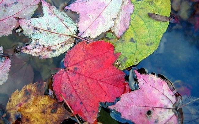 autumn-leaves-wallpaper-collection-05