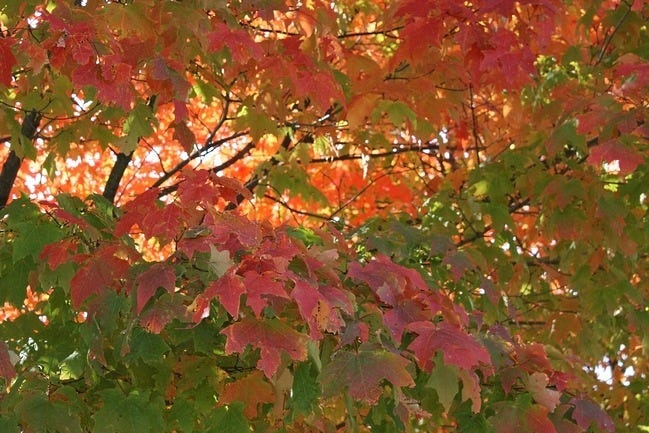 autumn-leaves-wallpaper-collection-07