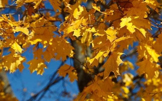 autumn-leaves-wallpaper-collection-10